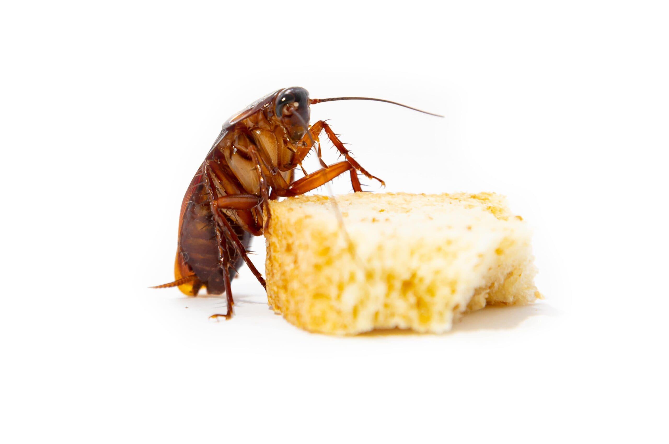 acabar-con-cucarachas